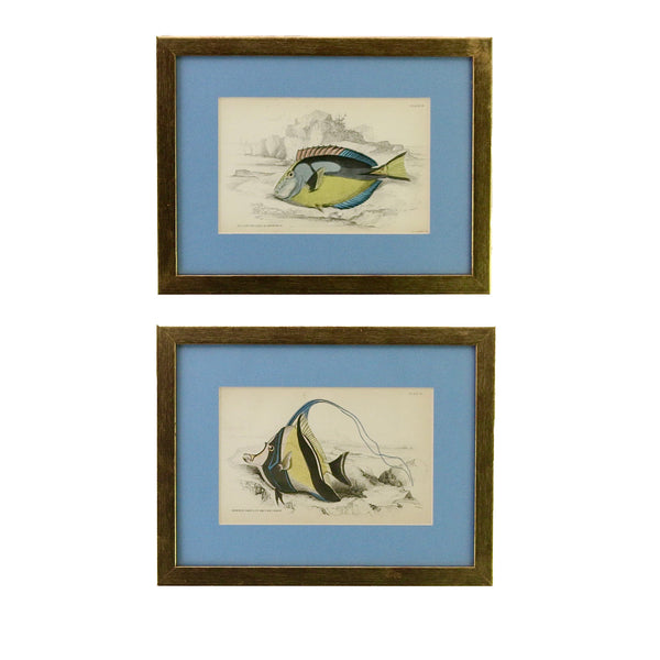 Pair of antique steel engravings of tropical fish
