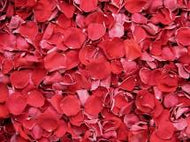 Rose Petal - Red Certified Organic
