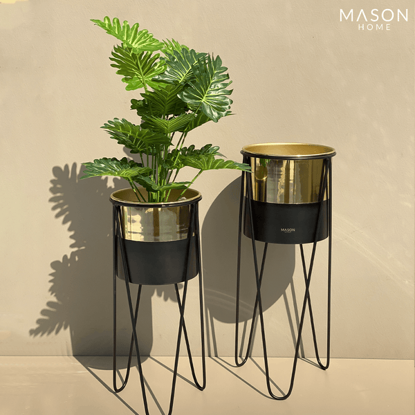 PRAGUE PLANTERS - BLACK/GOLD