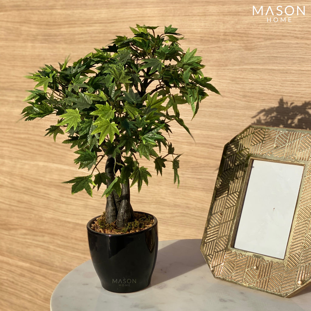 GREEN MAPLE MINI PLANT - Mason Home by Amarsons - Lifestyle & Decor