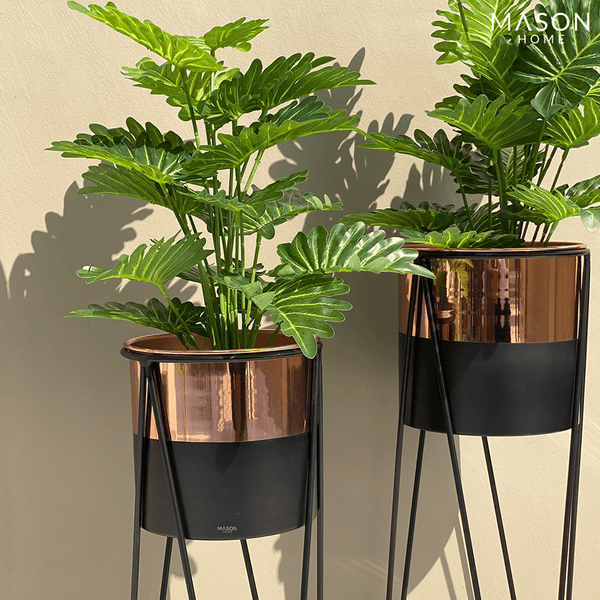 PRAGUE PLANTERS - BLACK/ROSE GOLD