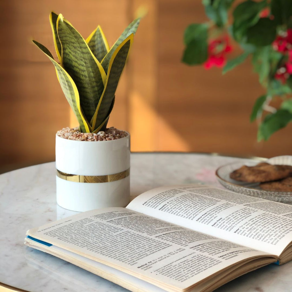 PECO PLANTER - Mason Home by Amarsons - Lifestyle & Decor
