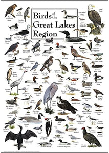 Birds of the great Great Lakes Region Poster