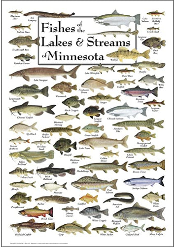 Fishes of the Lakes & Streams of Minnesota Poster