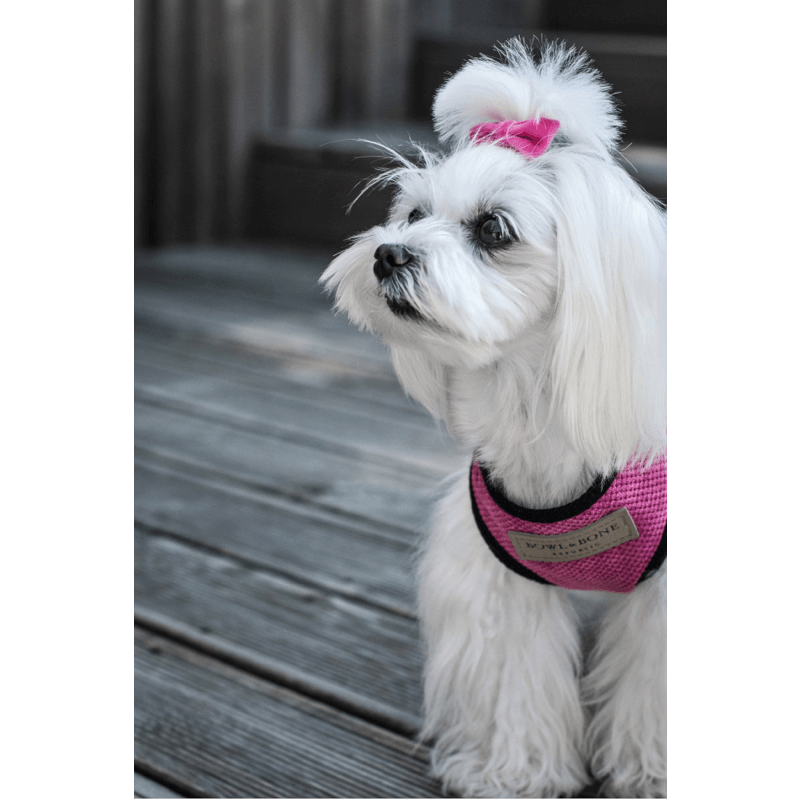 Bowl and Bone Candy Pink Dog Harness