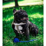 Bowl and Bone Blue Bullet Rope Dog Toy