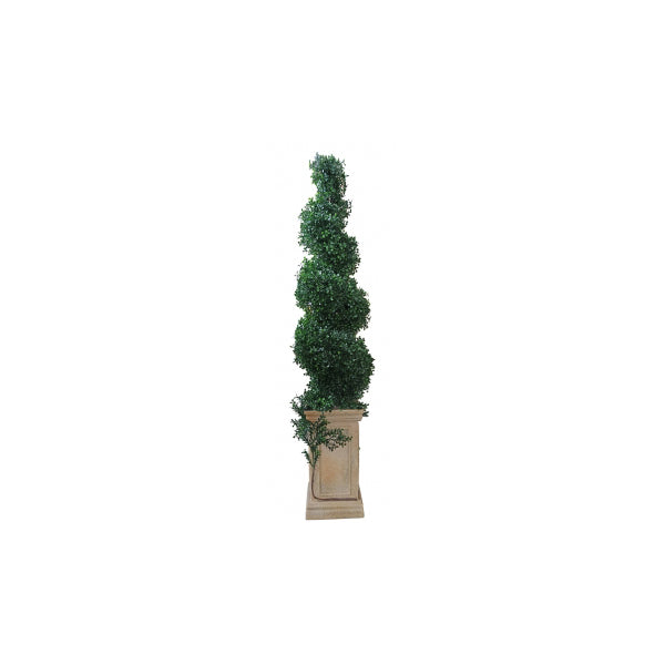 Boxwood Spiral Topiary on Pedestal