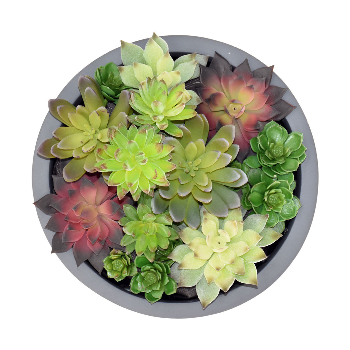 "11"" Round Planter with Succulents"