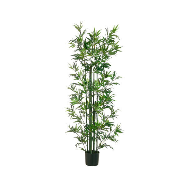 Bamboo Plant - Green Stalks with Green Foliage