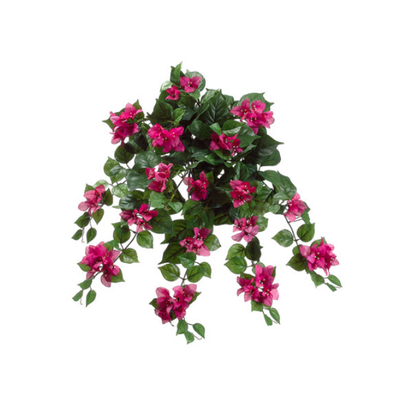 Bougainvillea Head