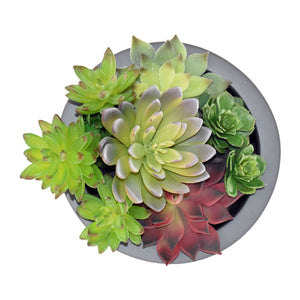 "8"" Cylinder Planter with Succulents"