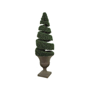 Boxwood Open Spiral Topiary