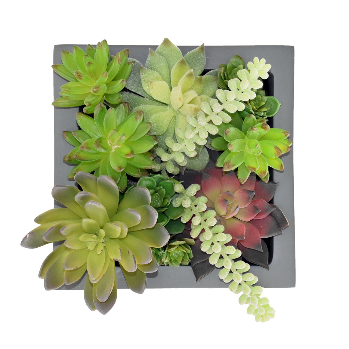 "8"" Cube Planter with Succulents"