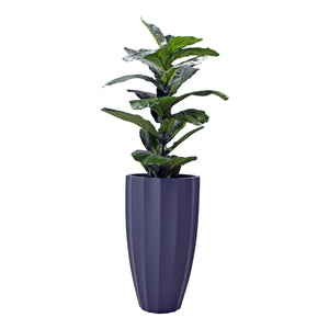 Fibreglass Fluted Planter with Fiddle Leaf Fig