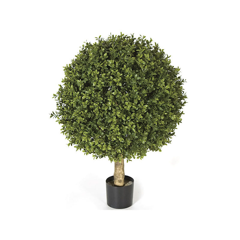Boxwood Single Ball Topiary