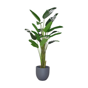 Fibreglass Round Planter with Traveller Palm