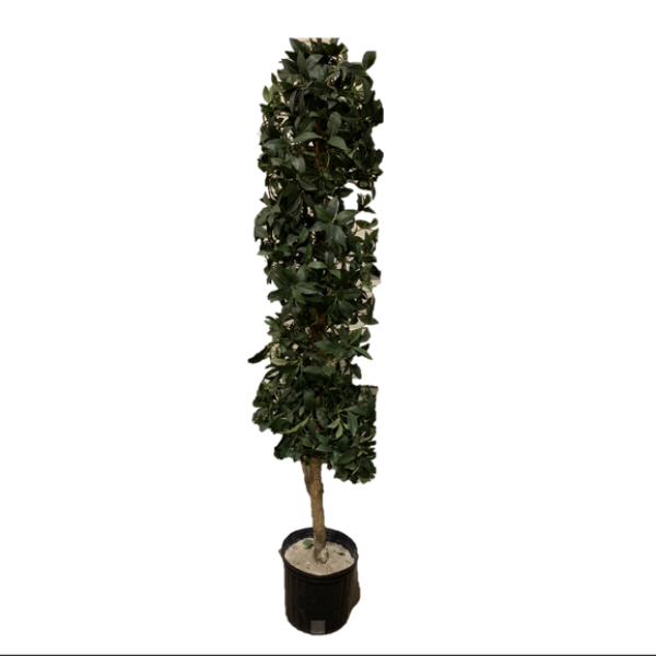 Bay Leaf Column Topiary