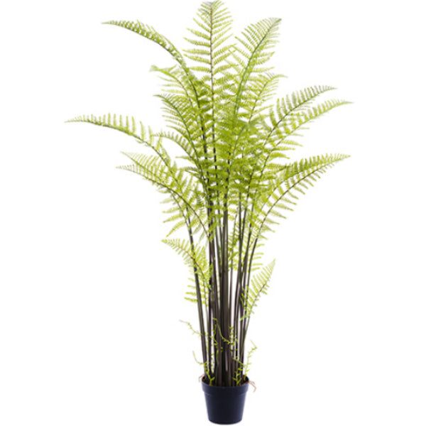Forest Fern Plant