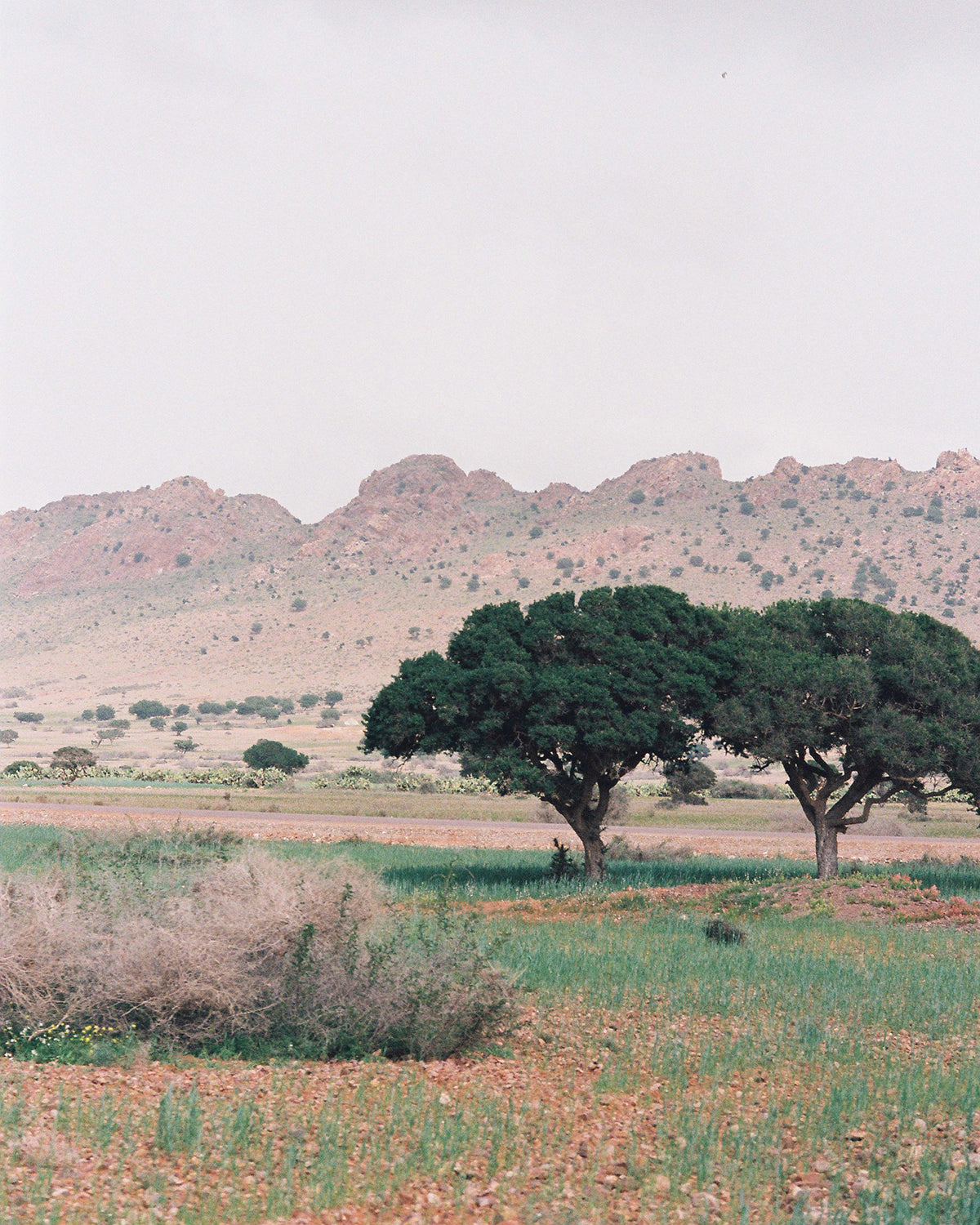 Treasure of the American Southwest:  Jojoba Seed Oil