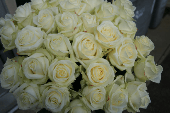 Luxury Long Stemmed (70cm)  White Roses - Yeomans Flowers in London NW1