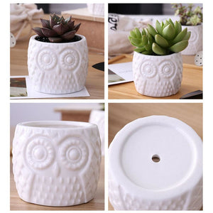 Mini Wood / Ceramic Owl Succulent Planter Pot Set