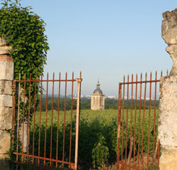 Le Clos du Bourg vineyard