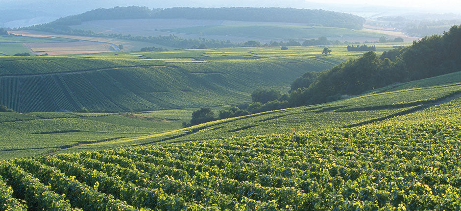 Bollinger-vineyards