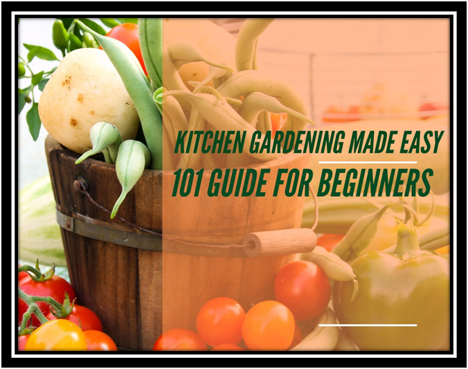 Kitchen Gardening Made Easy | A Basic 101 Guide For Beginners In 2020