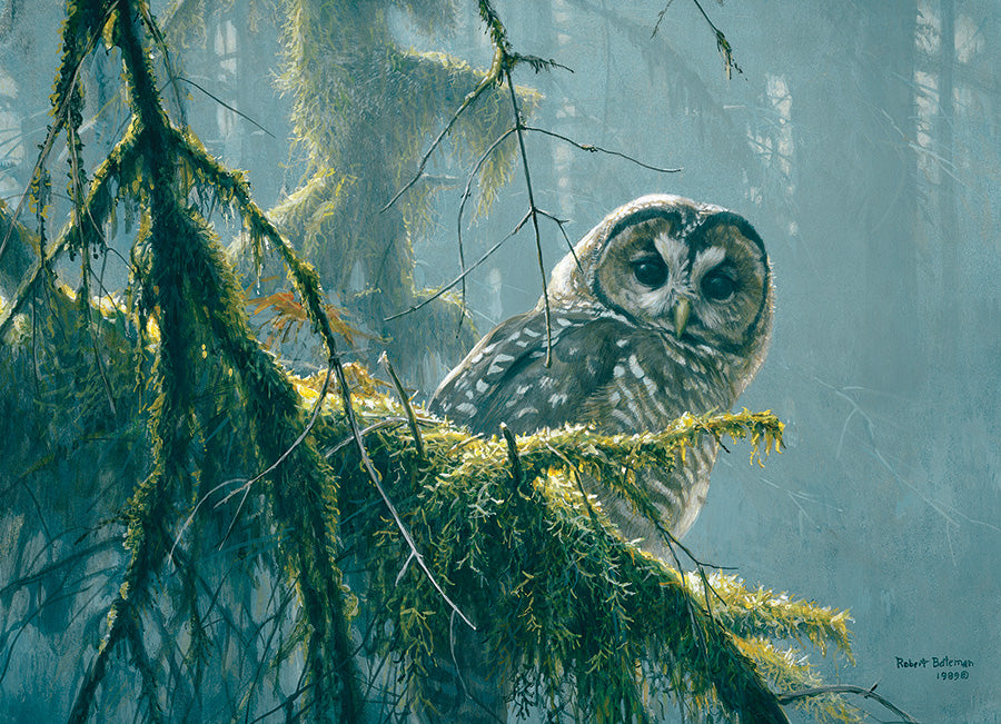 Mossy Branches - Spotted Owl