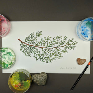 Cedar - Original Watercolour Painting