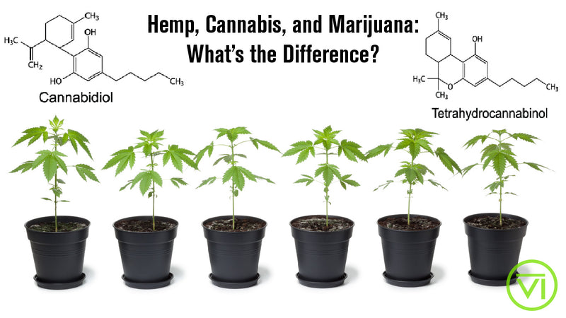 Hemp, Cannabis, and Marijuana: What's the Difference?