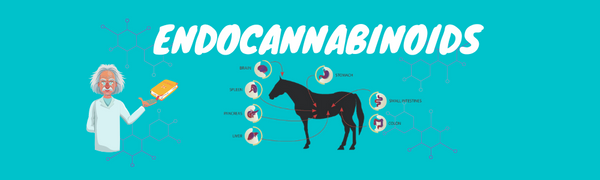 What is the Horse Endocannabinoid System?
