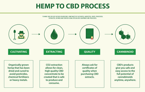 How CBD Oil Is Extracted from Hemp