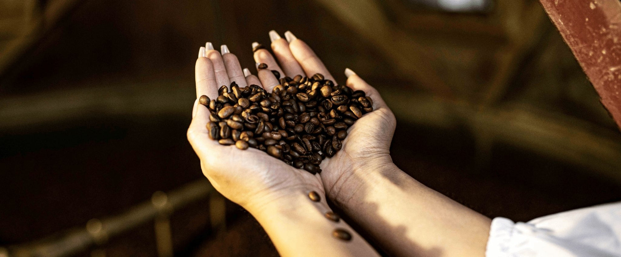 What is the Difference Between Arabica Versus Robusta Coffee Beans? | Omni