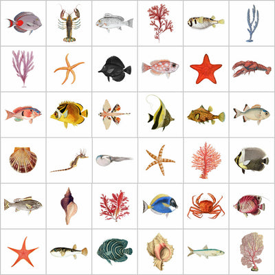Tile Sticker Pack of 36 Vintage Fish & Sea-life Illustrations
