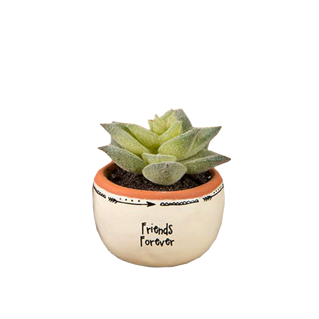 Friends Forever Succulent - 19 Dollars Or Less