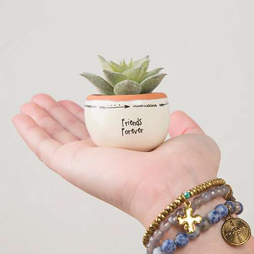 Friends Forever Succulent