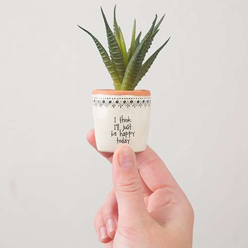 I think I'll Just be happy Succulent