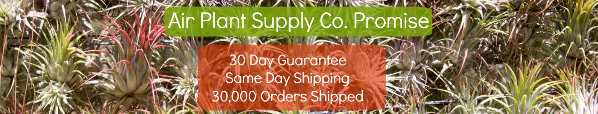 Air Plant Supply Co Guarantee and Free Shipping on Air Plants