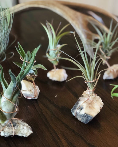 Copper Toxic for Air Plants Care