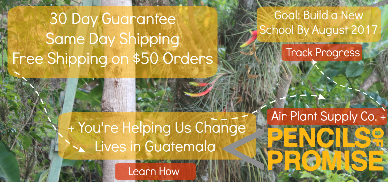 You Can Help Us Build A School in Guatemala