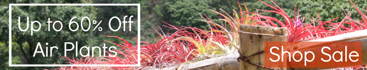 Shop Sale: Up to 60% Off Tillandsia Air Plants & Displays