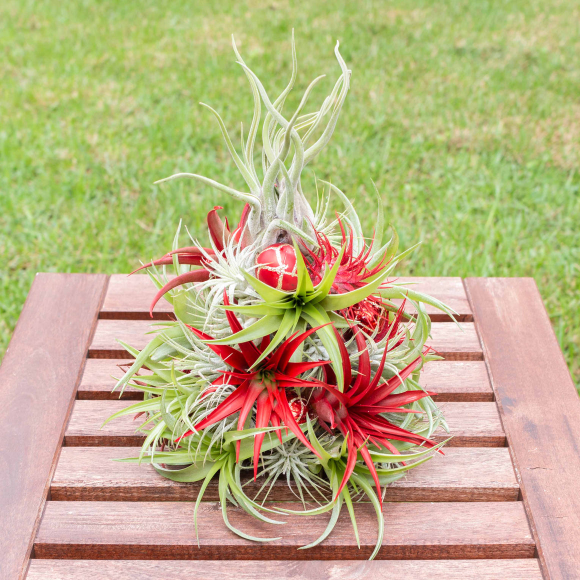 PRE-ORDER: 11 Inch Tall Miniature Handmade Air Plant Christmas Tree with 35 Living Tillandsias