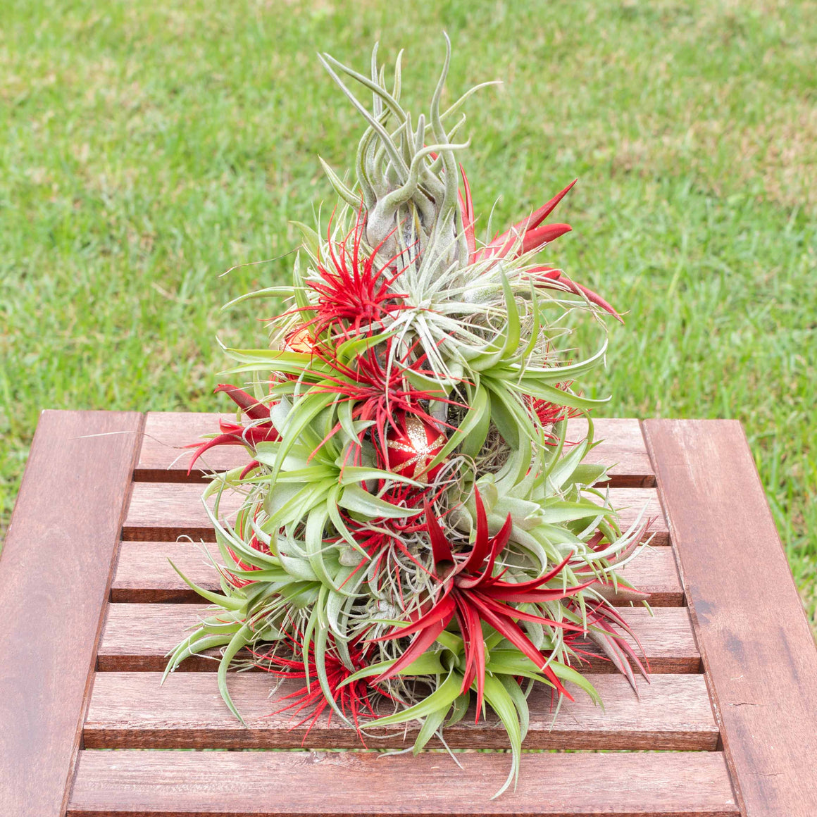 PRE-ORDER: 14 Inch Tall Handmade Air Plant Christmas Tree with 50 Living Tillandsias