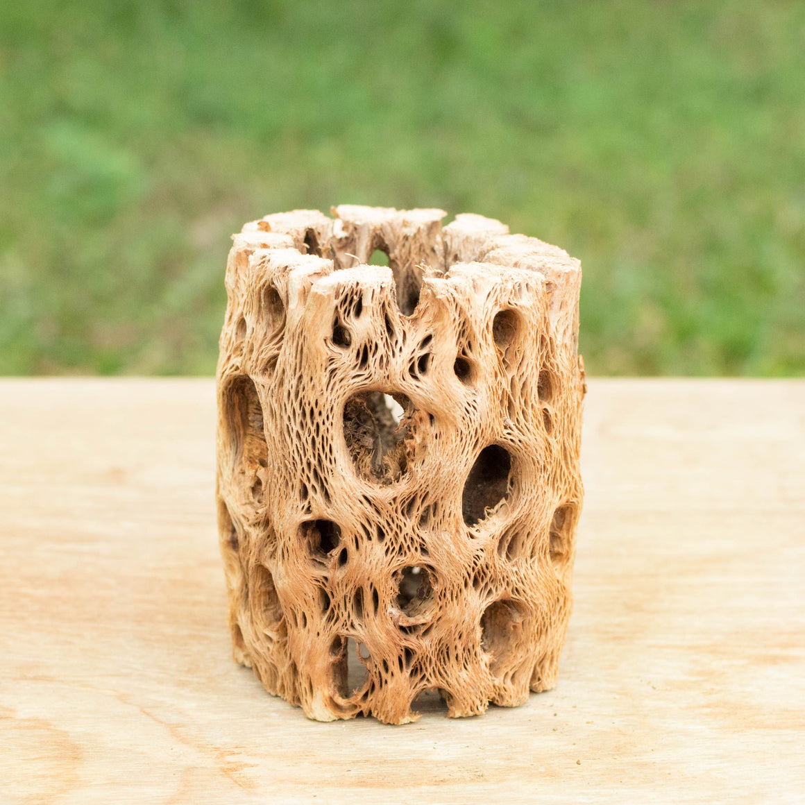 Natural Cholla Wood Container - 3 Inches Tall