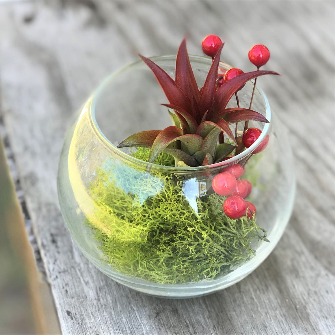 Festive Terrarium with Green Reindeer Moss, Berry Sprig, & Red Abdita Air Plant