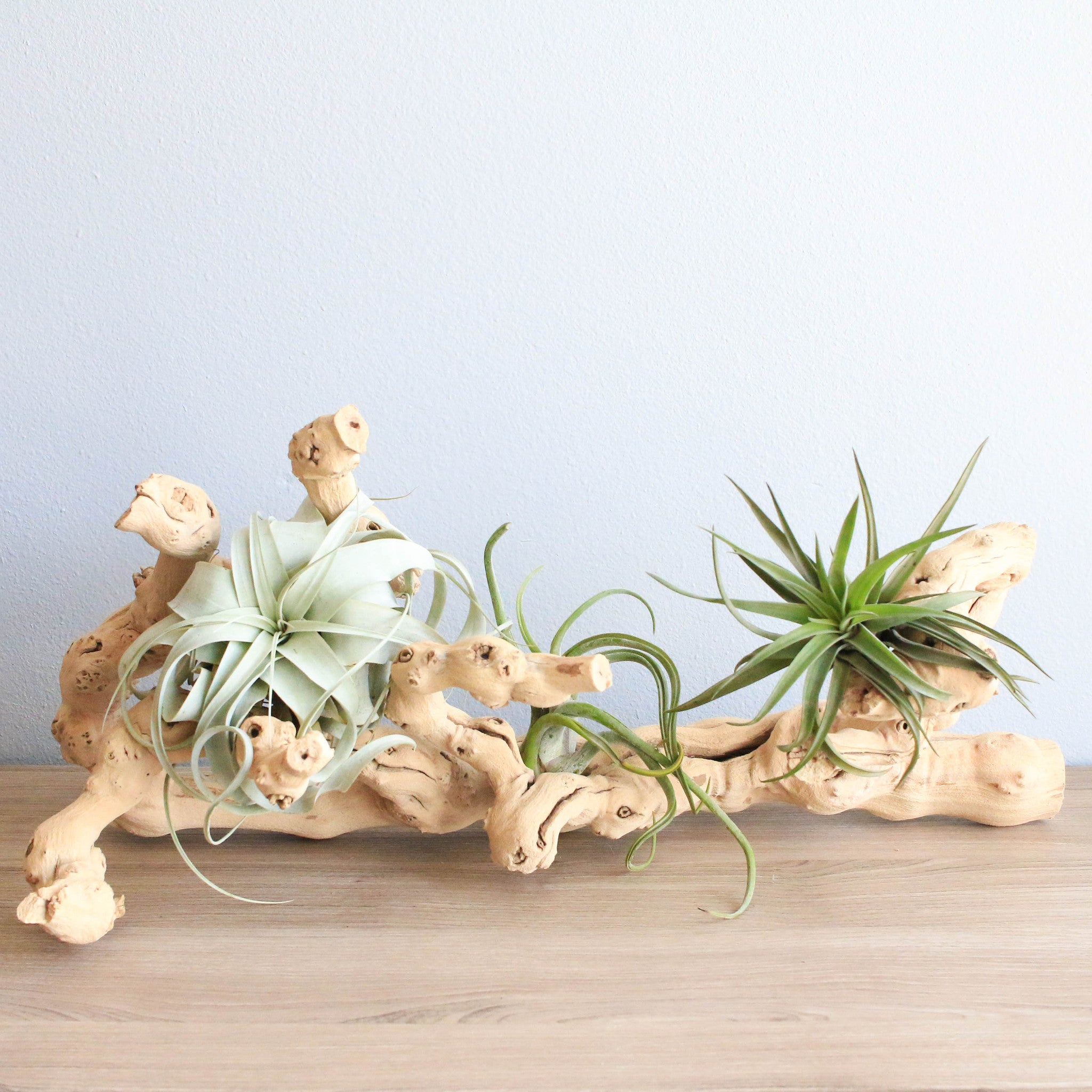 Wholesale sandblasted grapevine wood with assorted air for Cheap air plants