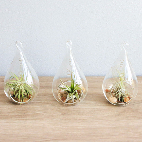 Wholesale Airy Teardrop Terrariums with Air Plants & Riverstones