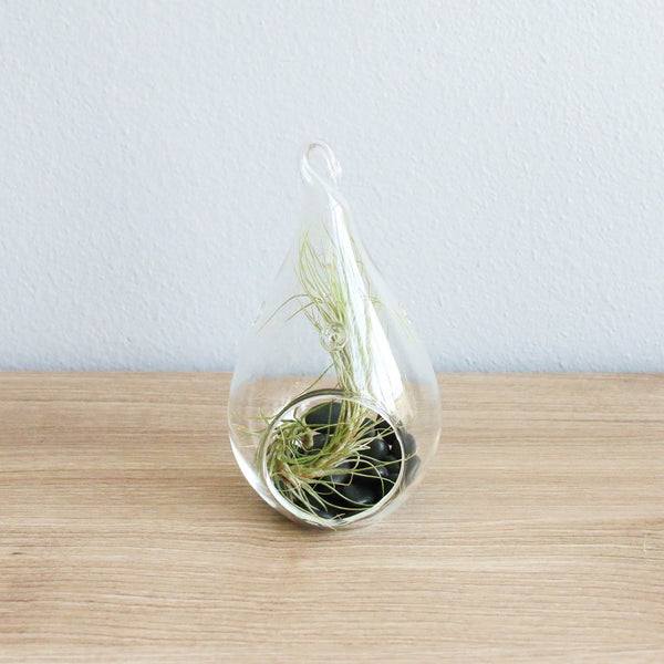 Set of 3 Funky Teardrop Terrariums with Flat Bottoms