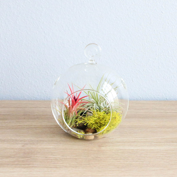 Set of 2 Stunning Hanging Glass Terrariums with Flat Bottoms